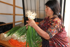 Gloria grows and sells onions.